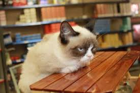 Meme Generator Grumpy Cat - grumpy cat table meme generator imgflip