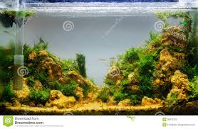 aquascaping of the planted aquarium stock photos image 35912153