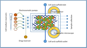 developing organ on a chip concepts using bio mechatronic design