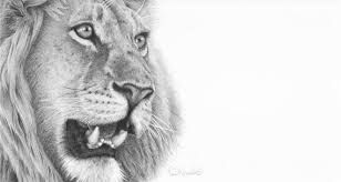 pencil drawings for sale clive meredith wildlife art