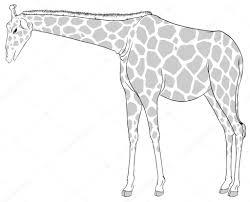 a sketch of a giraffe u2014 stock vector blueringmedia 41723353