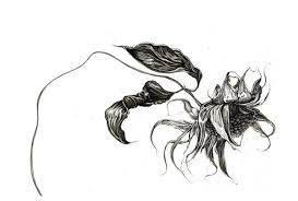 dead flower drawing best images collections hd for gadget