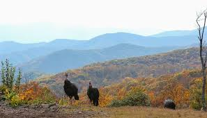 5 reasons to visit the smoky mountains at thanksgiving