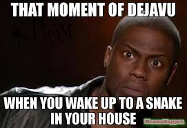 House Meme - that moment of dejavu when you wake up to a snake in your house