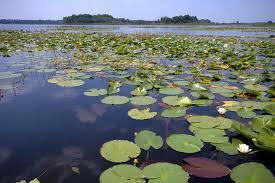 Fragrant Plants Florida - aquatic and wetland plants in florida u2013 plant management in