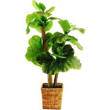 38 artificial mini fiddle leaf fig tree in a square basket with