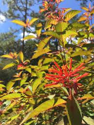 native plant nursery florida five essential perennials for florida gardens u2014 native nurseries