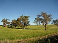 paddock trees in agricultural landscapes nsw environment heritage