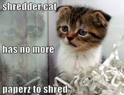 Shredding Meme - 31 best office shredder risks from shred all orlando images on