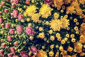 yellow flowers free stock images by libreshot