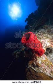 Strawberry Vase Sponge Vase Sponge Stock Photos U0026 Vase Sponge Stock Images Alamy