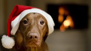 cute dog christmas wallpapers christmas animal wallpaper 67 images