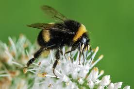adopt a hive saving the honey bees adopt a hive