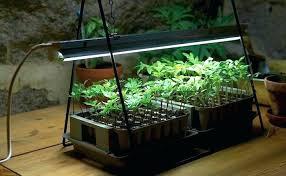 best grow lights for vegetables grow light for seedlings why lights are the best grow lights for