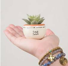 cute succulents 13 super cute ways to decorate your room with succulents lobbies