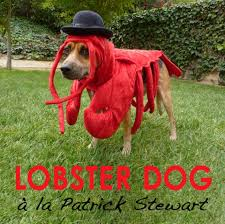 Lobster Costume How To Make A Lobster Costume For Your Dog Pethelpful