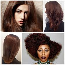 chestnut brown hair color ideas image collections hair color ideas