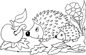 hedgehog coloring getcoloringpages