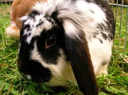 what animals get along with rabbits petfinder