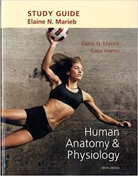 Human Anatomy And Physiology Study Guide Pdf Study Guide For Human Anatomy U0026 Physiology 9780321794390