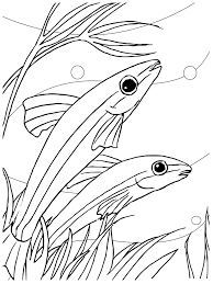 fresh fish coloring sheet coloring book 4984 unknown