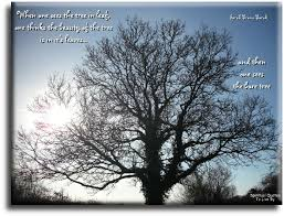 nature quotes sayings and verse