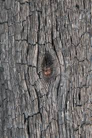 tree texture search in pictures