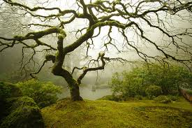 the most beautiful tree in the world a gallery on flickr