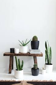 Home Decor Plants Living Room by Creative Indoor Plants Decors For Christmas New Year Home Decor