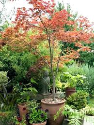 evergreen plants for small gardens best small trees ideas only on