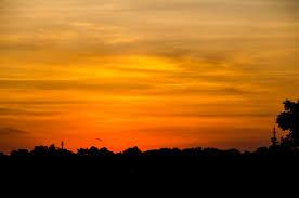 Sunset Orange by Silhouette Of Trees Under Orange Sky Free Stock Photo