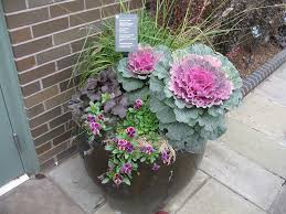 horned violet coral bells ornamental kale and grass