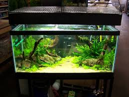 Aquascape Environmental Home Accessories Glamorous Aquascape Designs With Various Fish