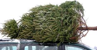 christmas tree delivery christmas tree e commerce delivery