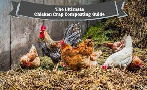 the ultimate chicken crap composting guide the sleuth journal