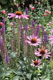 cottage gardening flower archives flower gardening