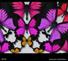 viceroy monarch butterfly painted style oranges bright