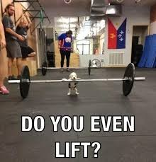 Funny Meme Pictures 2014 - do you even lift best memes of 2014