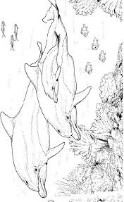 Dauphin A Colorier Pages Imprimable Dauphin Coloriage Mystere Disney