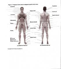 muscle worksheets for anatomy tag muscles in the body worksheet