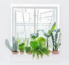 plantes dépolluantes chambre à coucher les 55 meilleures images du tableau plantes dépolluantes sur