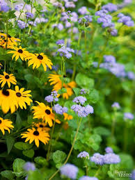 Our Favorite Plants How To by Best 25 What Flowers To Plant Together Ideas On Pinterest