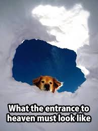 Lost Dog Meme - 375 best dog heaven and pet loss images on pinterest pets dog