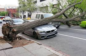 stanced bmw m5 ouchhh tree crushes m5