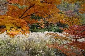 view menu excursion for autumn color