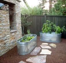 horse trough as a raised garden grow containers tomatoes