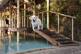 dog daycare floor plans paradise ranch pet resort cage free dog boarding in los angeles
