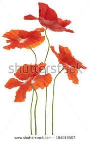 acrylic color painting orange yellow poppy stock illustration