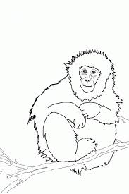 cute baby monkey coloring pages monkey face coloring page coloring home