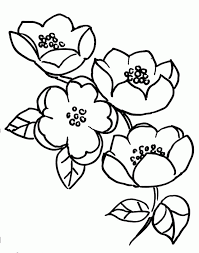 apple tree coloring pages apple blossom coloring page coloring home